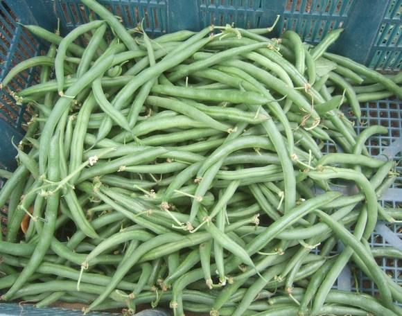 夏野菜の収穫_b0137932_19445047.jpg