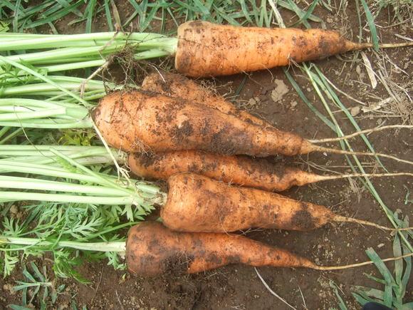 夏野菜の収穫_b0137932_19455670.jpg