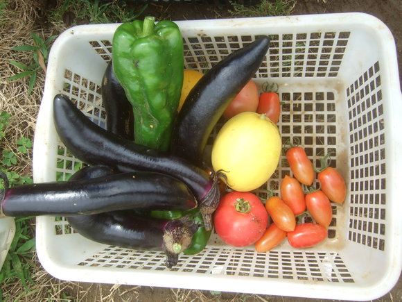 夏野菜の収穫_b0137932_1945955.jpg