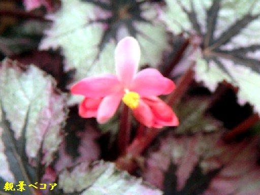 b0012636_20114479.jpg