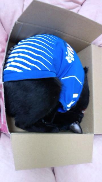 箱入り猫_e0114246_7351763.jpg
