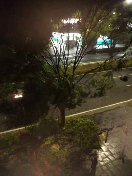 先日の台風で・・・_a0163159_0322417.jpg