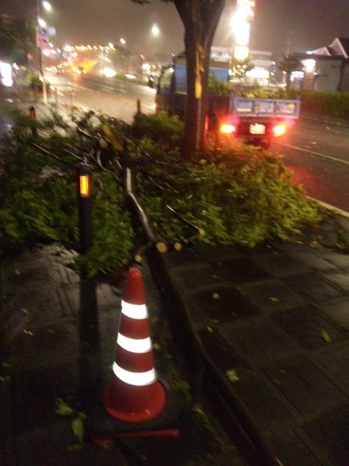先日の台風で・・・_a0163159_03241100.jpg