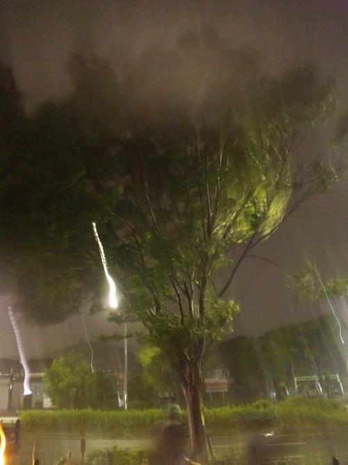 先日の台風で・・・_a0163159_032681.jpg