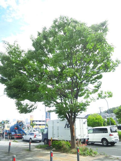 先日の台風で・・・_a0163159_0332035.jpg
