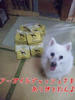 東海*保護犬たちにも♪_b0194462_20412711.jpg