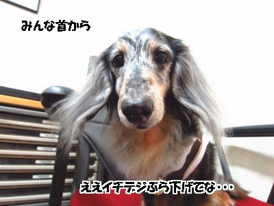 d0020869_1230130.jpg