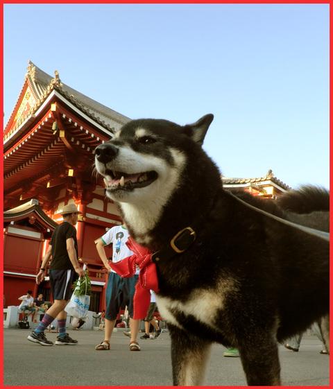 「江戸の夏」、満喫してます!_e0236072_16443069.jpg