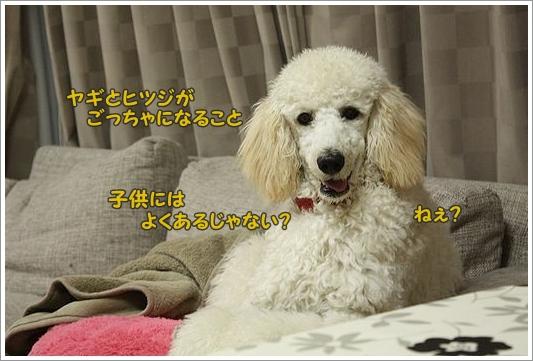 b0111376_059263.jpg