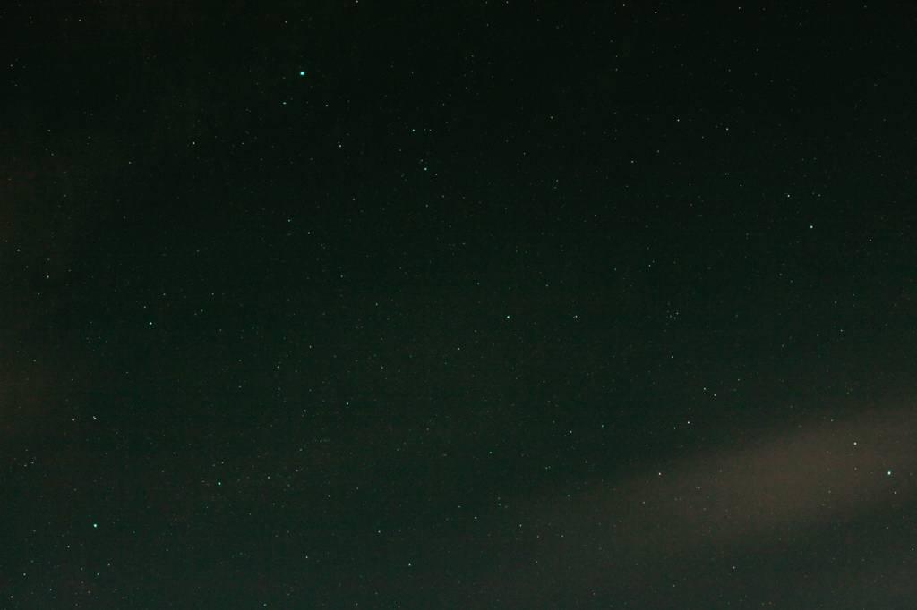 蓮カワセミ、留まりもの/ドバトに追われるホシゴイ/エメラルドグリーンの星_b0024798_10475026.jpg