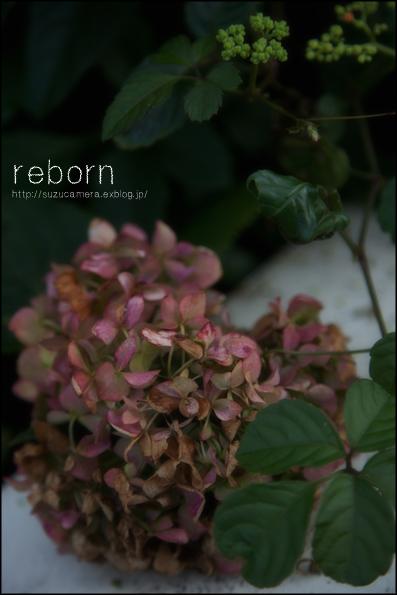 reborn_f0100215_23591588.jpg