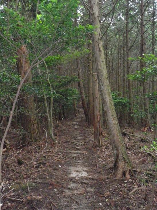 山歩き:比叡山越え_b0134026_17363574.jpg