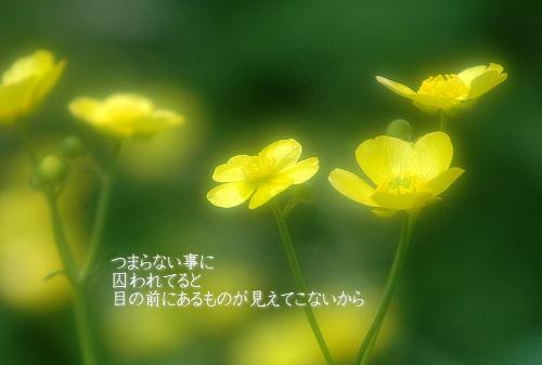 a0104940_1113846.jpg