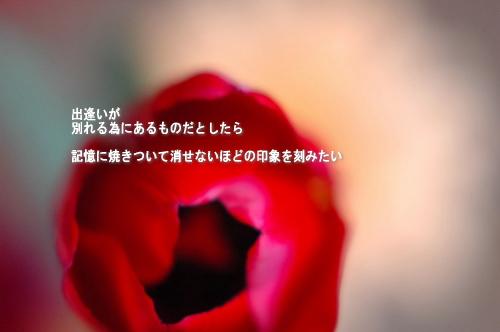 a0104940_11213754.jpg