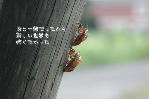 a0104940_1123181.jpg