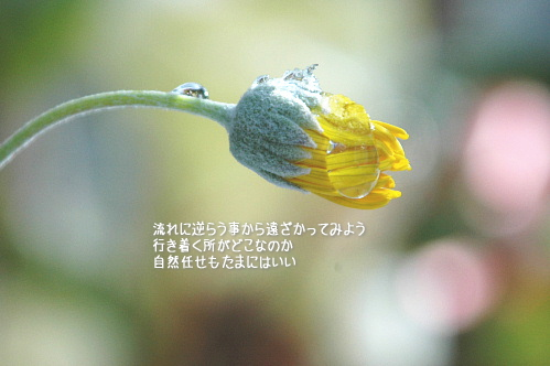 a0104940_11245224.jpg