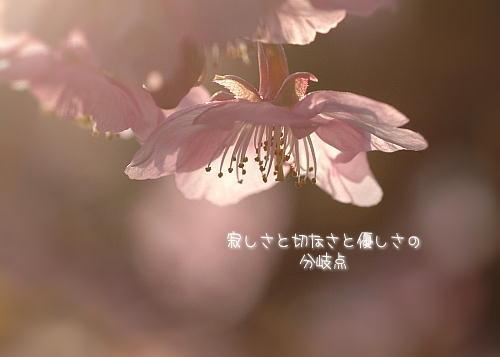 a0104940_119511.jpg