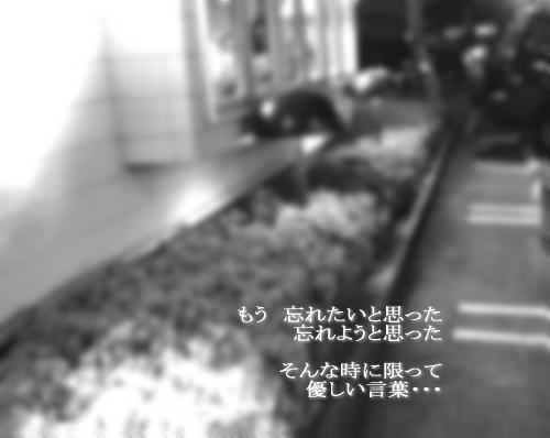 a0104940_329334.jpg