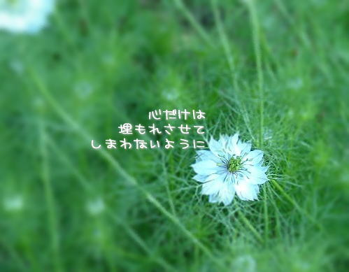 a0104940_4125165.jpg