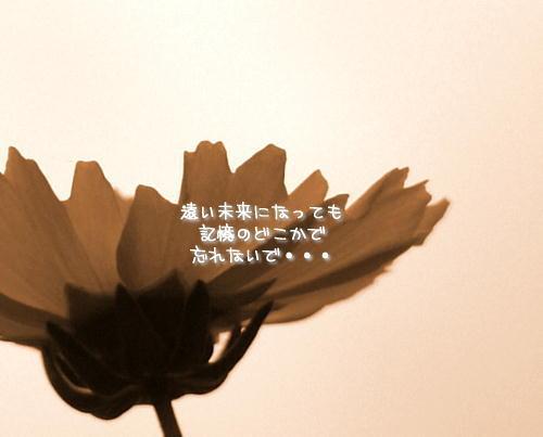 a0104940_4153848.jpg