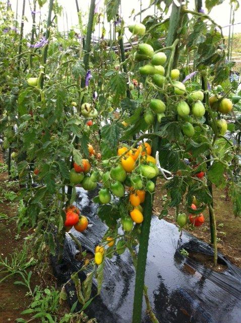 本日は強風の上に雨・・ボランティアの方々にはお休み頂きました・しかし収穫は物凄くありました_c0222448_13235571.jpg