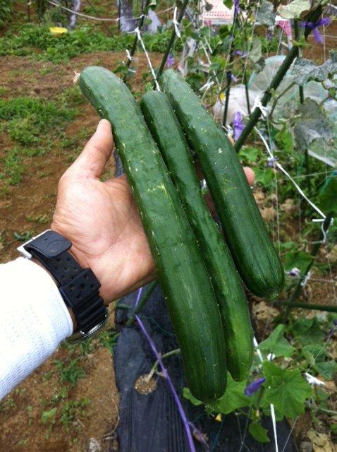 本日は強風の上に雨・・ボランティアの方々にはお休み頂きました・しかし収穫は物凄くありました_c0222448_1324365.jpg