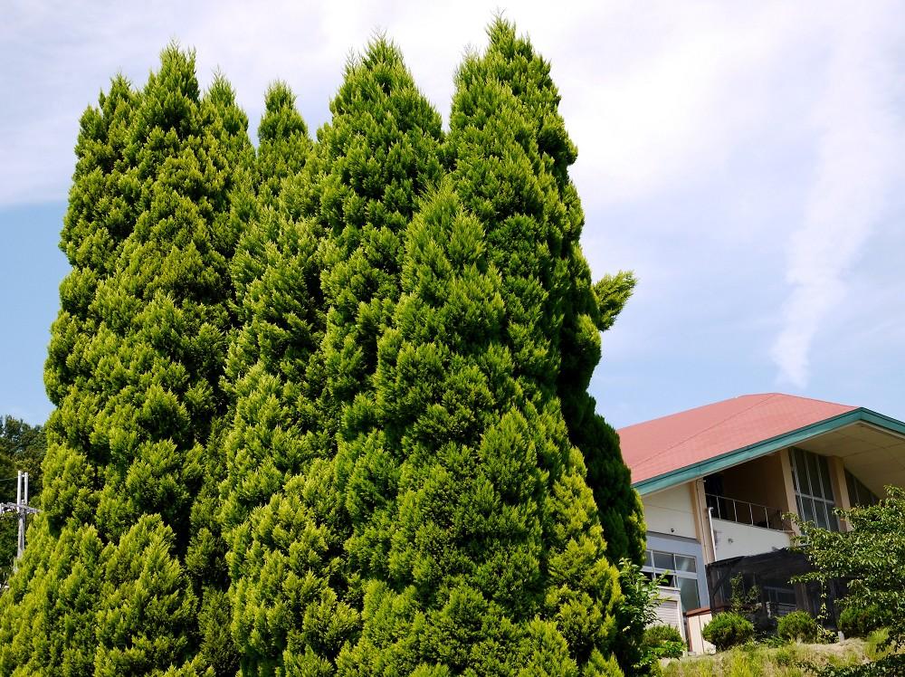 和歌山県植物公園緑花センター _b0093754_2391820.jpg
