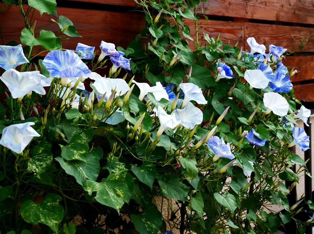 和歌山県植物公園緑花センター _b0093754_2394543.jpg