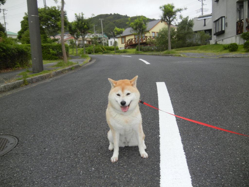 '12,7,12(木)愛ちゃん散歩は大ハッスル!_f0060461_9351790.jpg
