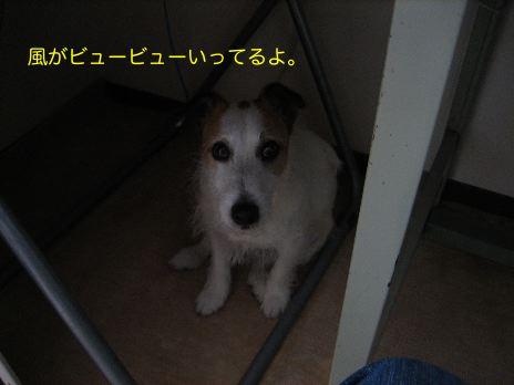 c0179472_937472.jpg
