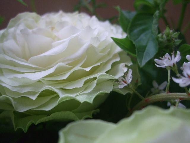 オークリーフ(薔薇のアレンジメント)_f0049672_127186.jpg