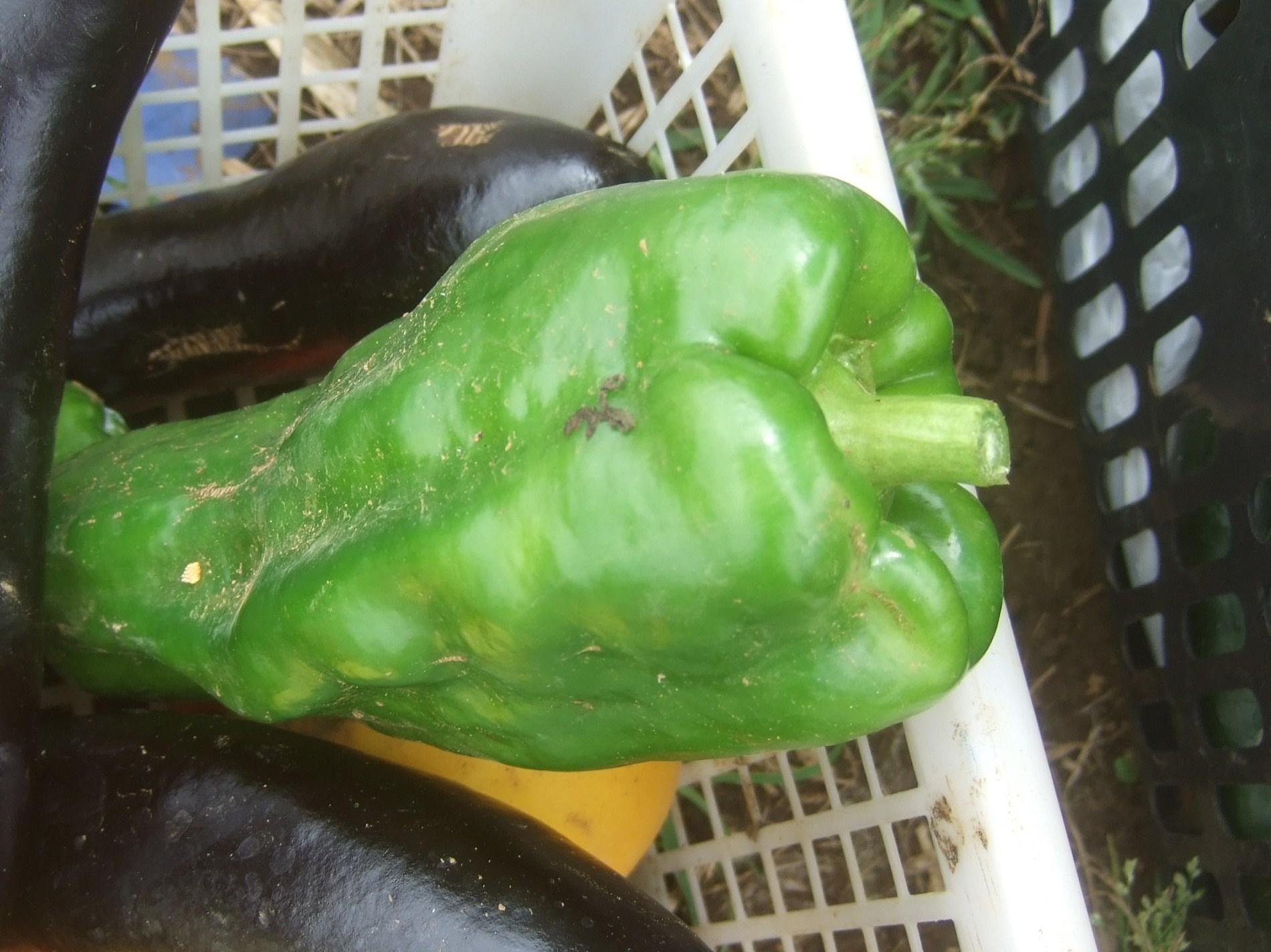 夏野菜の収穫_b0137932_21283832.jpg