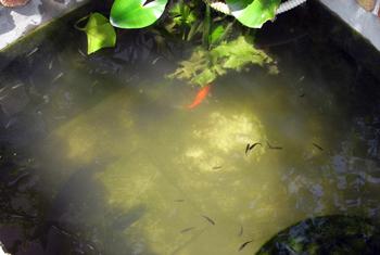 池底掃除用ポンプを作る_d0130640_14451497.jpg