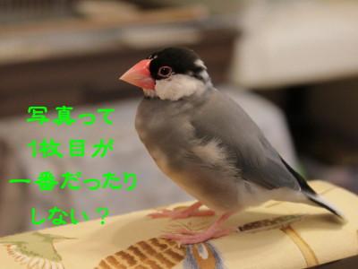b0158061_2324428.jpg