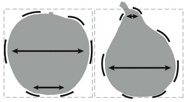 形を正確に再現するーその⑵リンゴ(前半)_f0227963_14581524.jpg