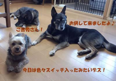 b0127675_2013447.jpg