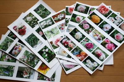 ◆バラのポストカード_e0154682_23281243.jpg