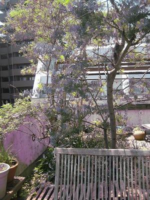 庭と緑を愛する女性たち_a0233896_1411622.jpg