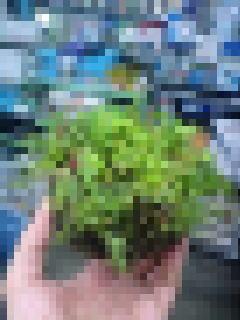 侘び草で水草レイアウトを作ろう!_b0141806_23201810.jpg