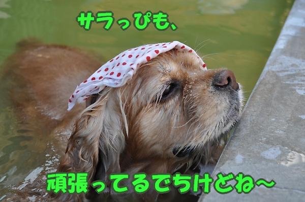 b0067012_20131157.jpg