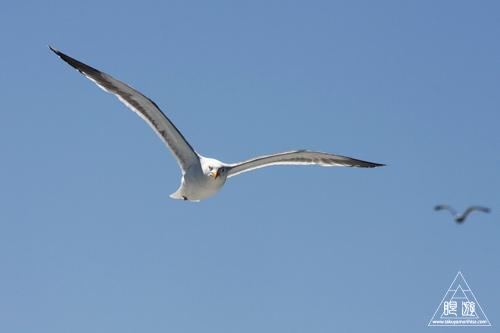 241 Alcatraz Island ~お目当ては野鳥~_c0211532_17495681.jpg