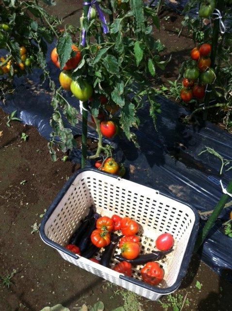 今日の料理には トマト達がたくさん入ります_c0222448_14552649.jpg