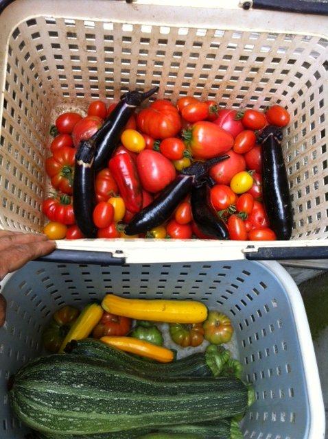 今日の料理には トマト達がたくさん入ります_c0222448_1455413.jpg