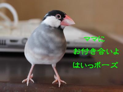 b0158061_2030944.jpg