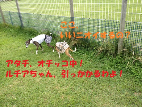 f0223972_8361032.jpg