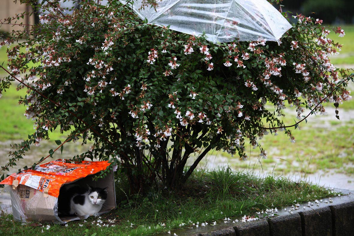 雨の日_b0107576_12101531.jpg