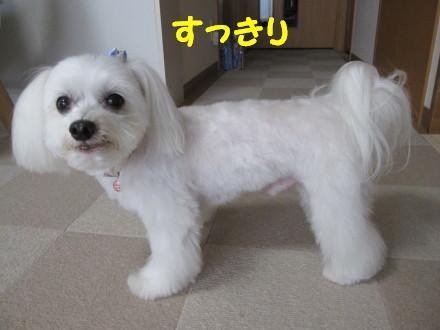 b0193480_20113819.jpg