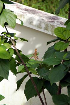 小動物対昆虫_f0144385_13512771.jpg