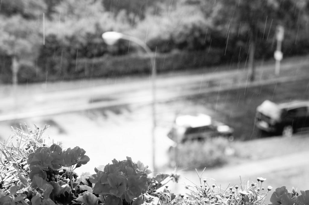 雨の土曜日。_c0180686_19193575.jpg