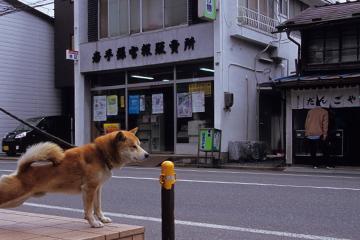 にゃんぽ_b0259218_4442651.jpg